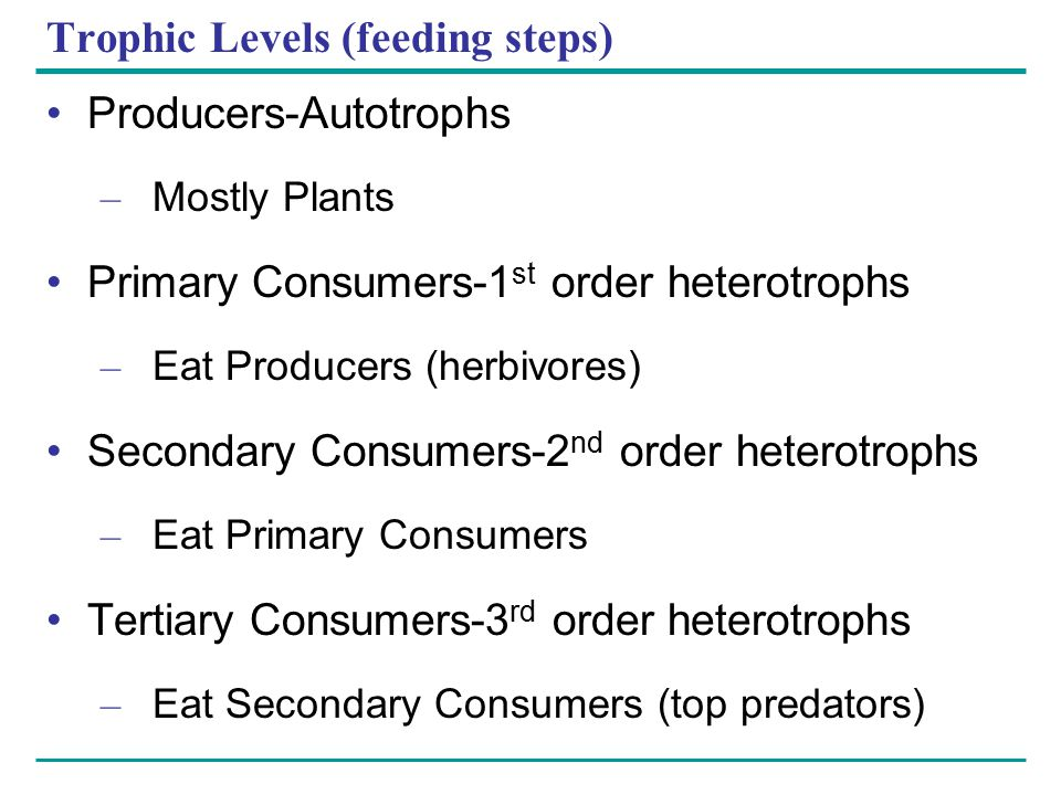 Trophic Levels (feeding steps)