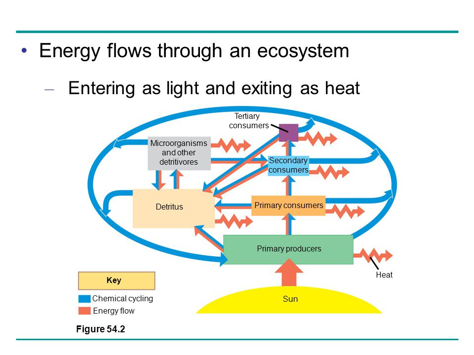 Energy flows through an ecosystem