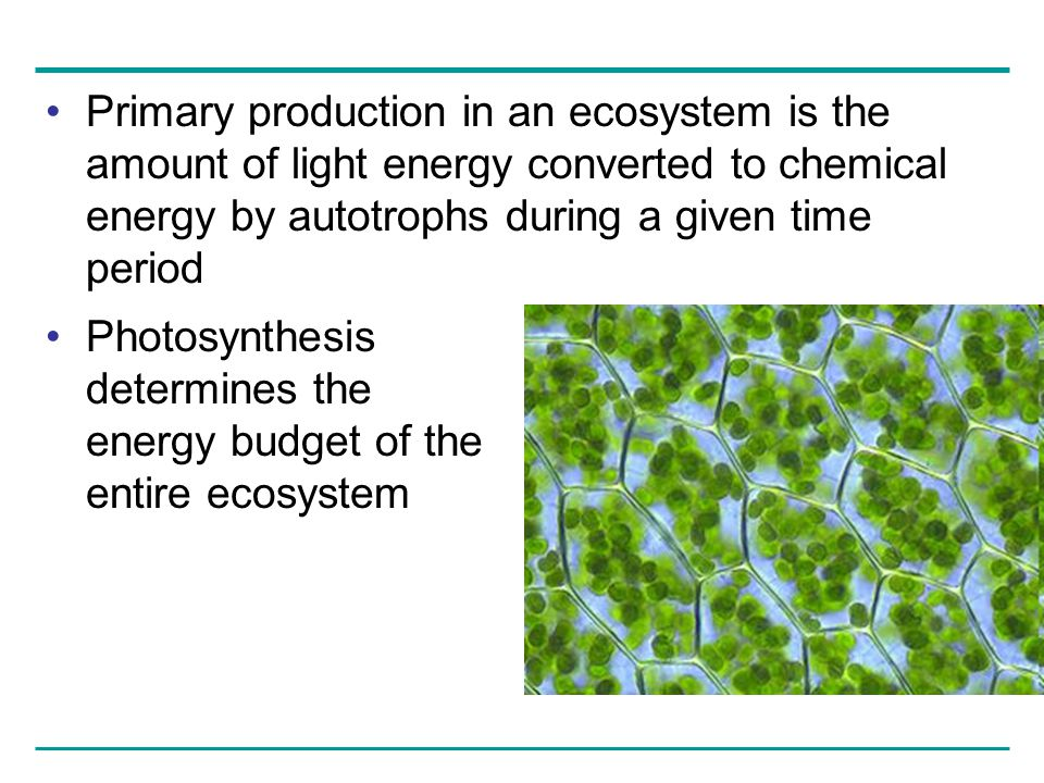 Primary production in an ecosystem is the amount of light energy converted to chemical energy by autotrophs during a given time period
