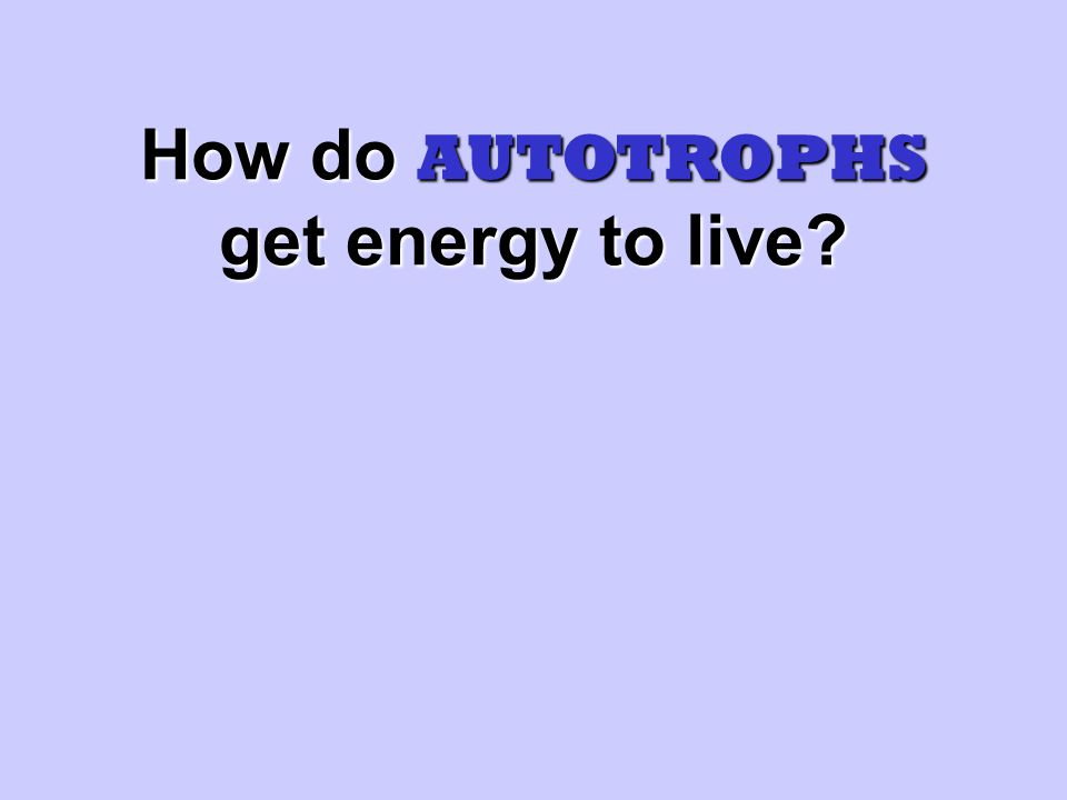 How do AUTOTROPHS get energy to live
