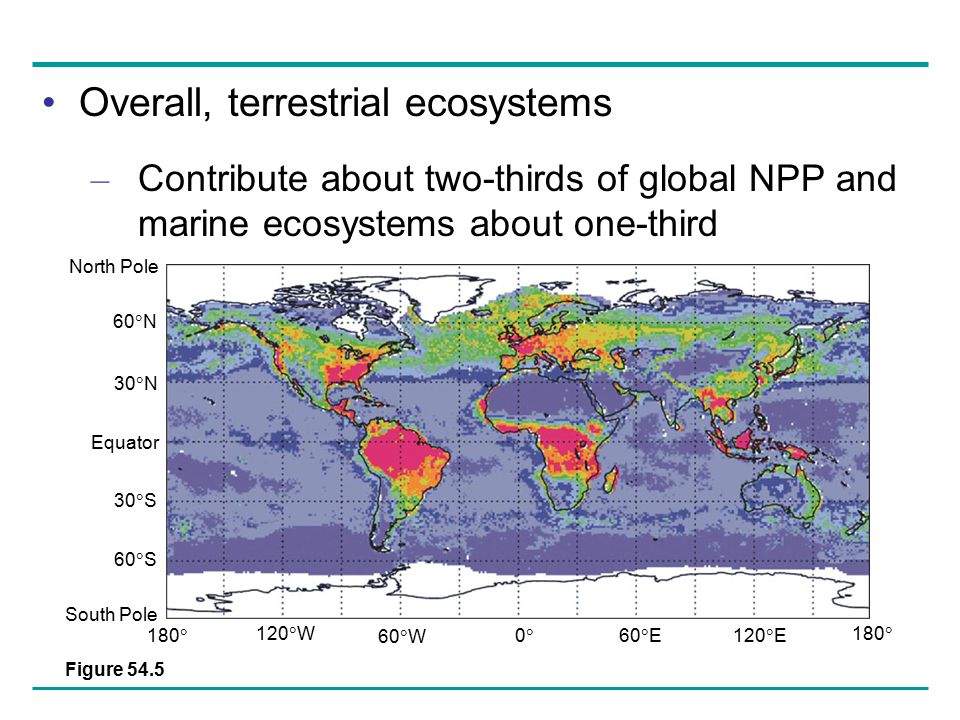 Overall, terrestrial ecosystems