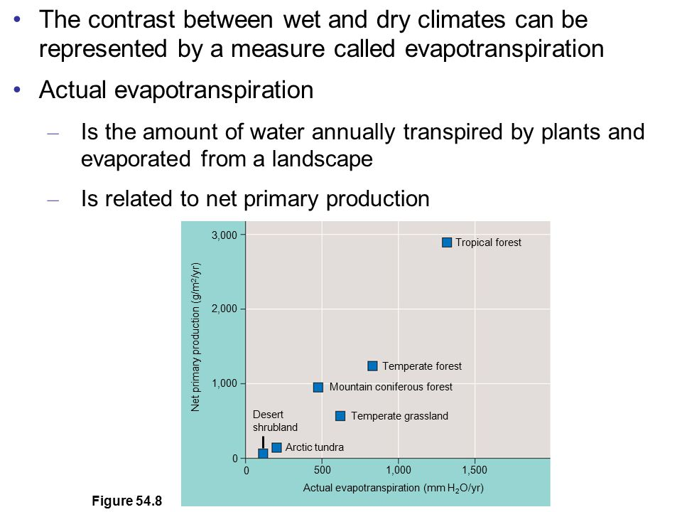 Actual evapotranspiration
