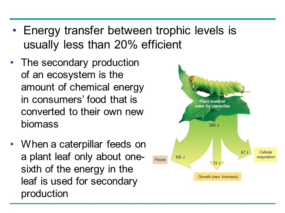 Energy transfer between trophic levels is usually less than 20% efficient