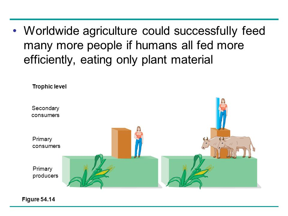 Worldwide agriculture could successfully feed many more people if humans all fed more efficiently, eating only plant material
