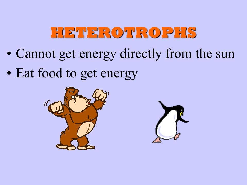 HETEROTROPHS Cannot get energy directly from the sun