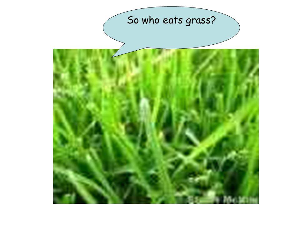 So who eats grass