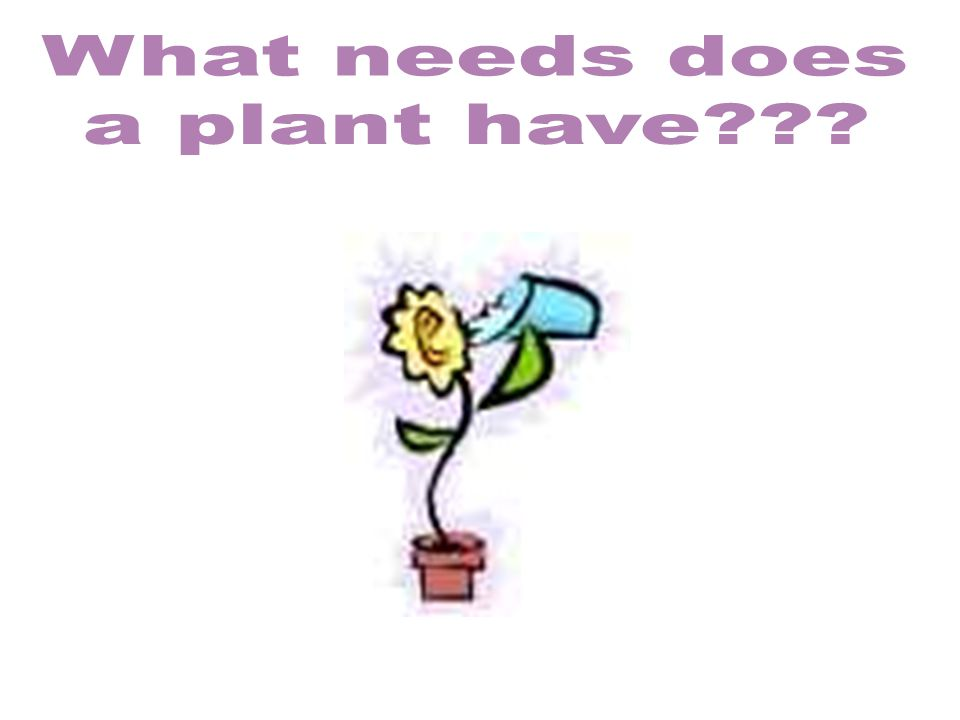 What needs does a plant have