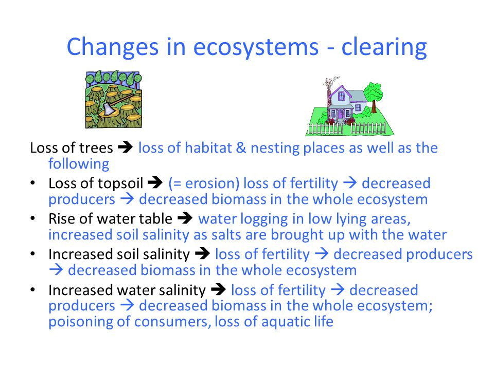 Changes in ecosystems - clearing