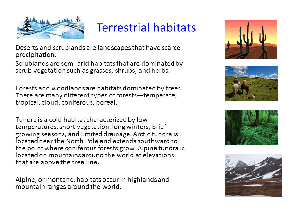 Terrestrial habitats Deserts and scrublands are landscapes that have scarce precipitation.