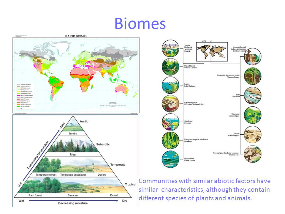 Biomes Communities with similar abiotic factors have similar characteristics, although they contain different species of plants and animals.