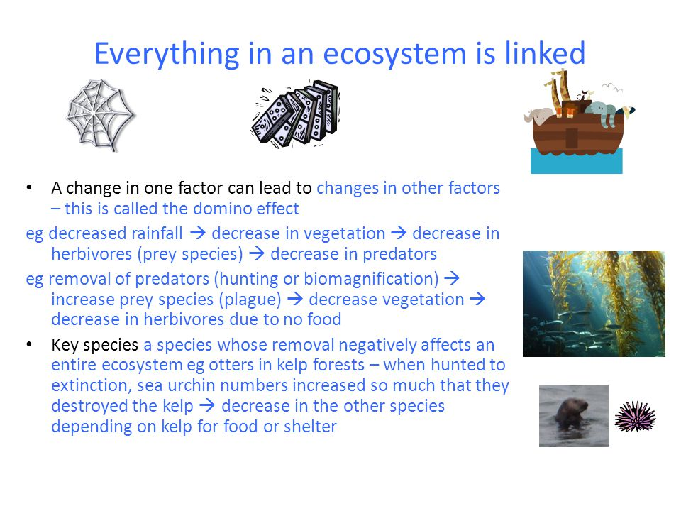 Everything in an ecosystem is linked