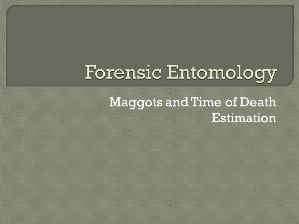 Maggots and Time of Death Estimation