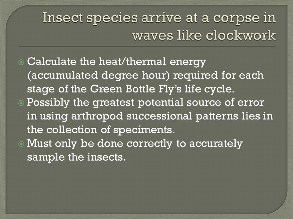 Insect species arrive at a corpse in waves like clockwork