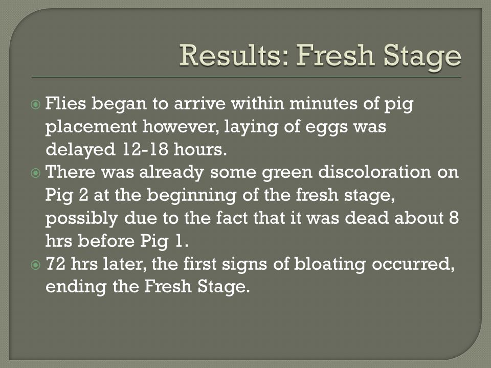Results: Fresh Stage Flies began to arrive within minutes of pig placement however, laying of eggs was delayed 12-18 hours.