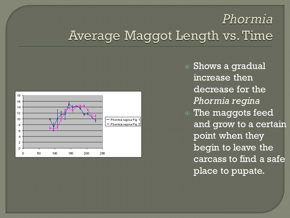 Phormia Average Maggot Length vs. Time