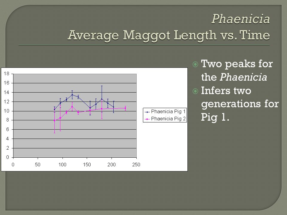 Phaenicia Average Maggot Length vs. Time