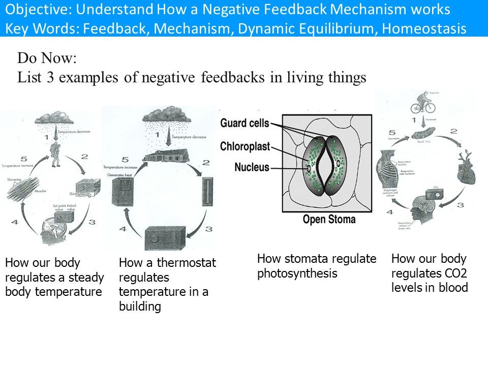 List 3 examples of negative feedbacks in living things