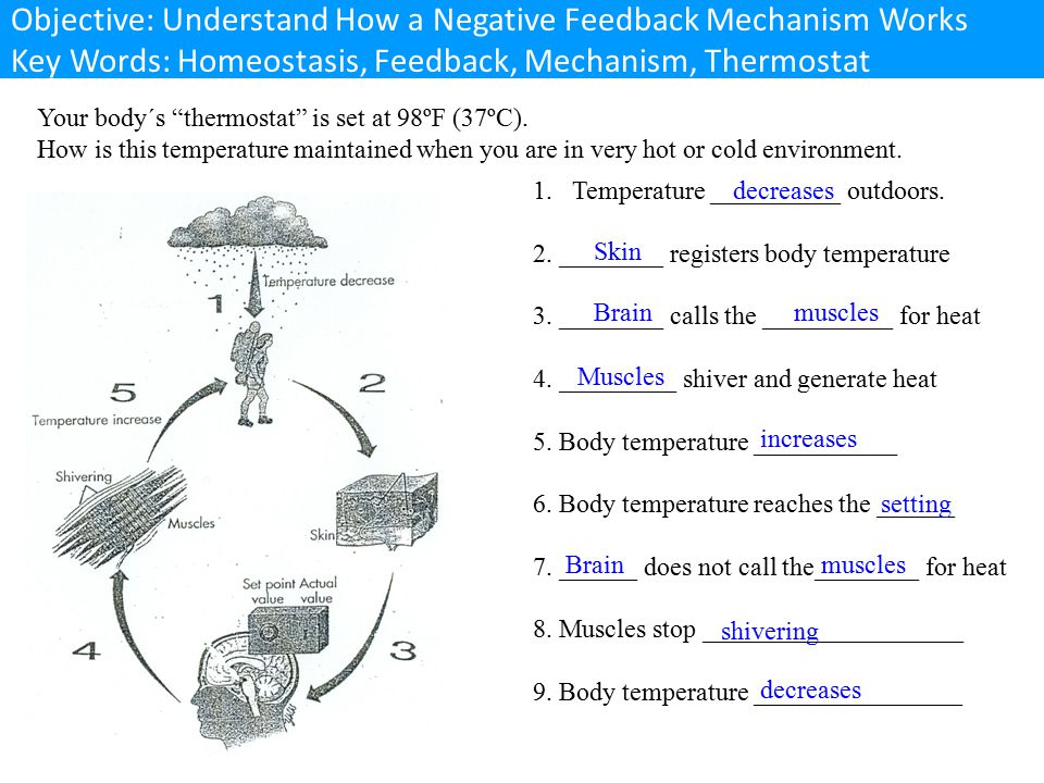 Objective: Understand How a Negative Feedback Mechanism Works Key Words: Homeostasis, Feedback, Mechanism, Thermostat