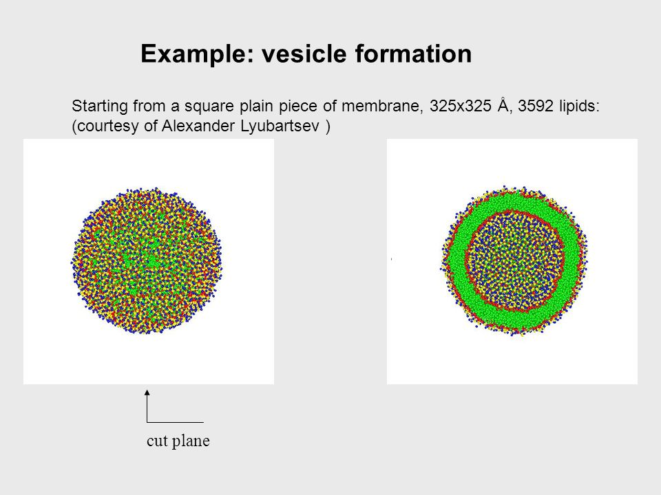 Example: vesicle formation