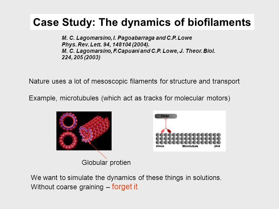Case Study: The dynamics of biofilaments