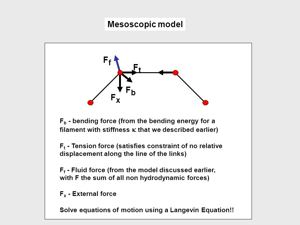 Mesoscopic model Ff Ft Fb Fx