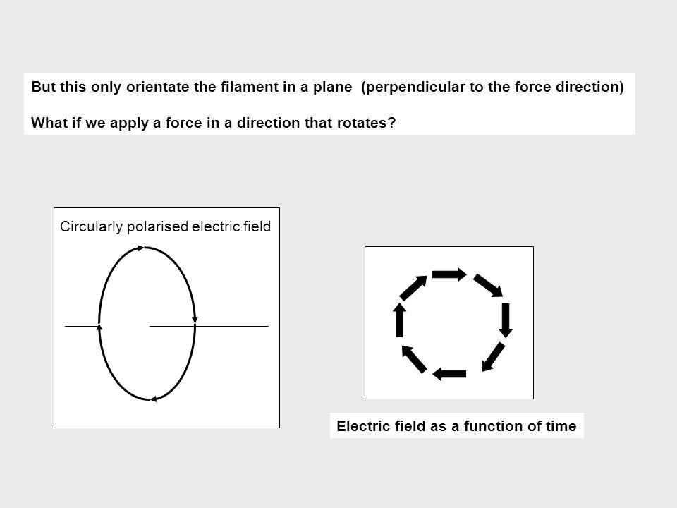 But this only orientate the filament in a plane (perpendicular to the force direction)