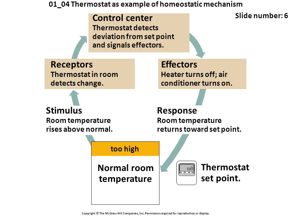 01_04 Thermostat as example of homeostatic mechanism