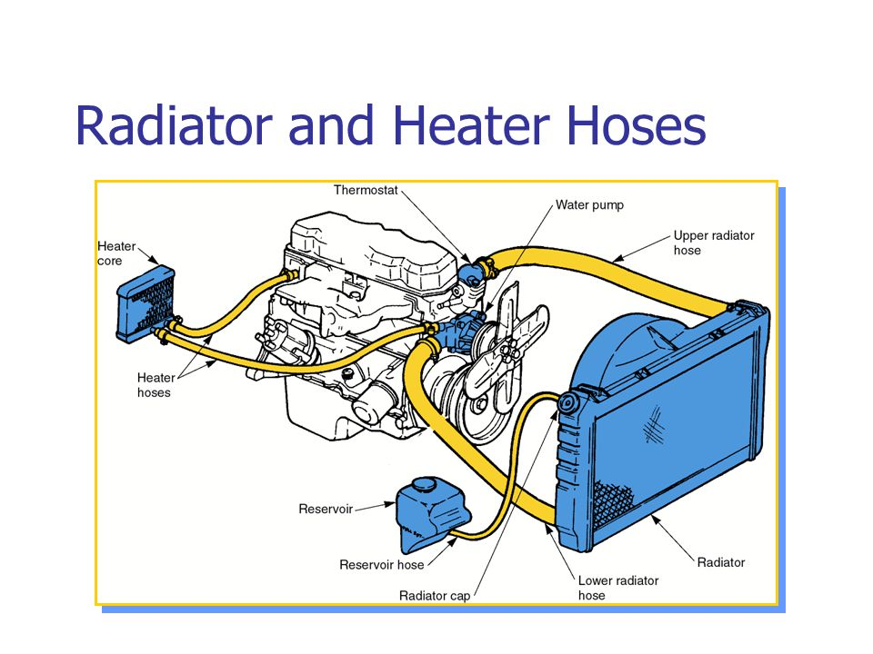 Radiator and Heater Hoses