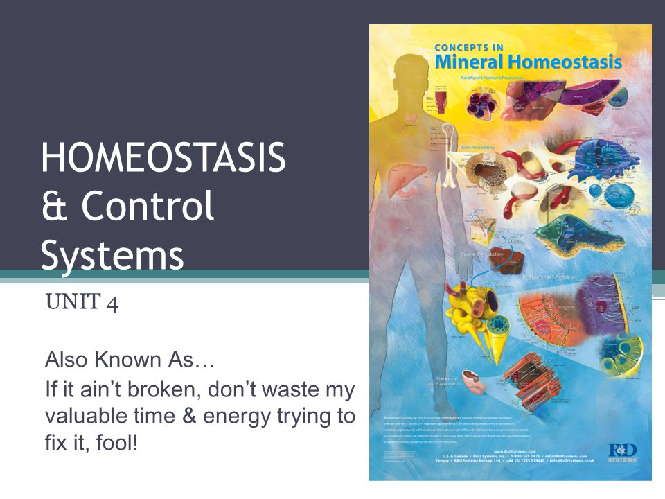 HOMEOSTASIS & Control Systems