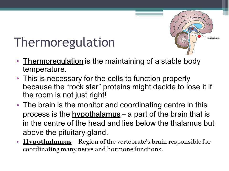 Thermoregulation Thermoregulation is the maintaining of a stable body temperature.