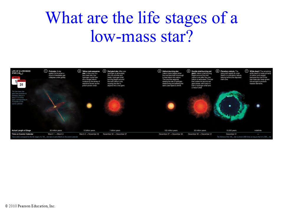 What are the life stages of a low-mass star