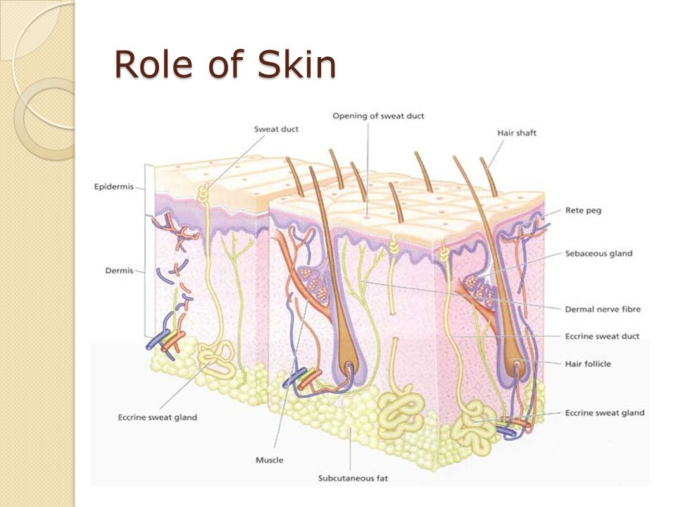 Role of Skin