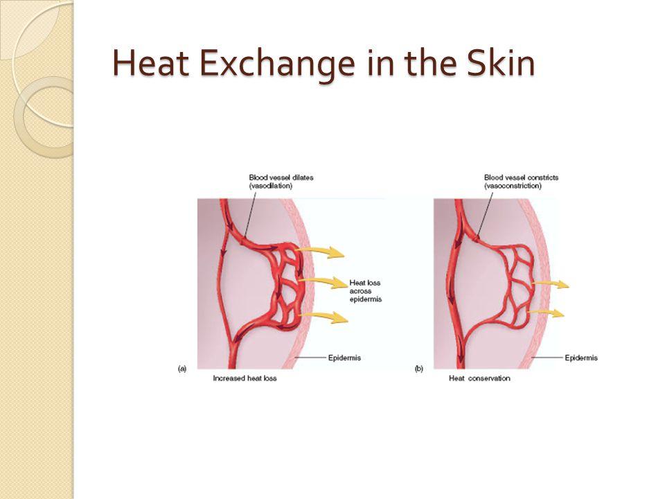 Heat Exchange in the Skin