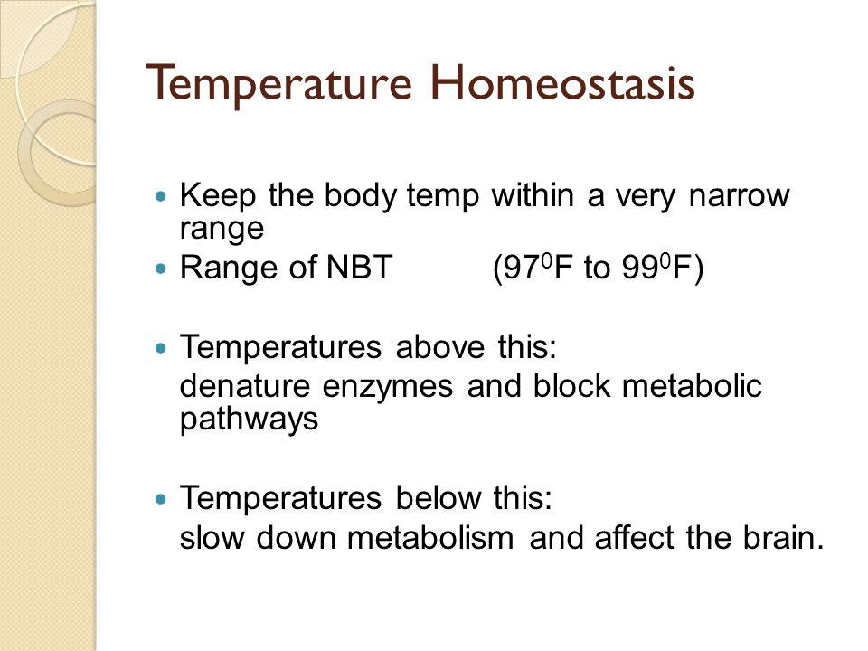 Temperature Homeostasis
