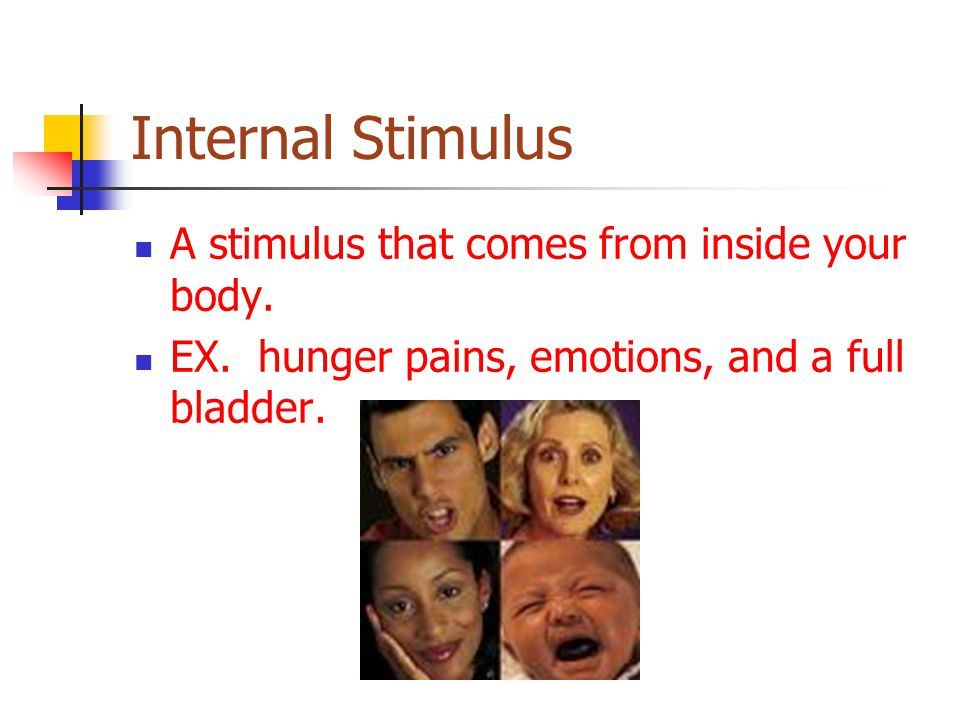 Internal Stimulus A stimulus that comes from inside your body.