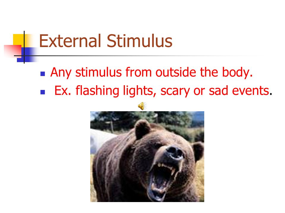 External Stimulus Any stimulus from outside the body.