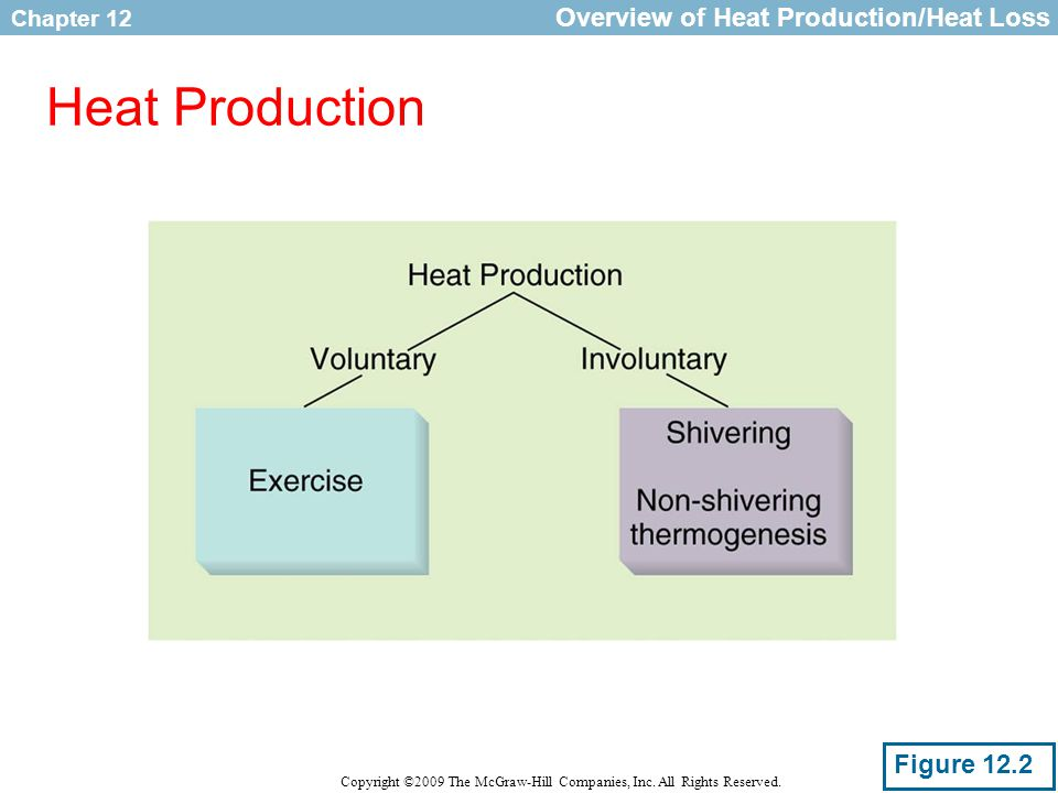 Overview of Heat Production/Heat Loss