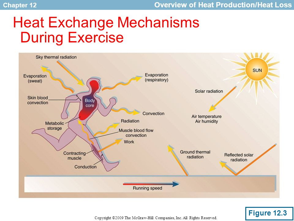 Heat Exchange Mechanisms During Exercise