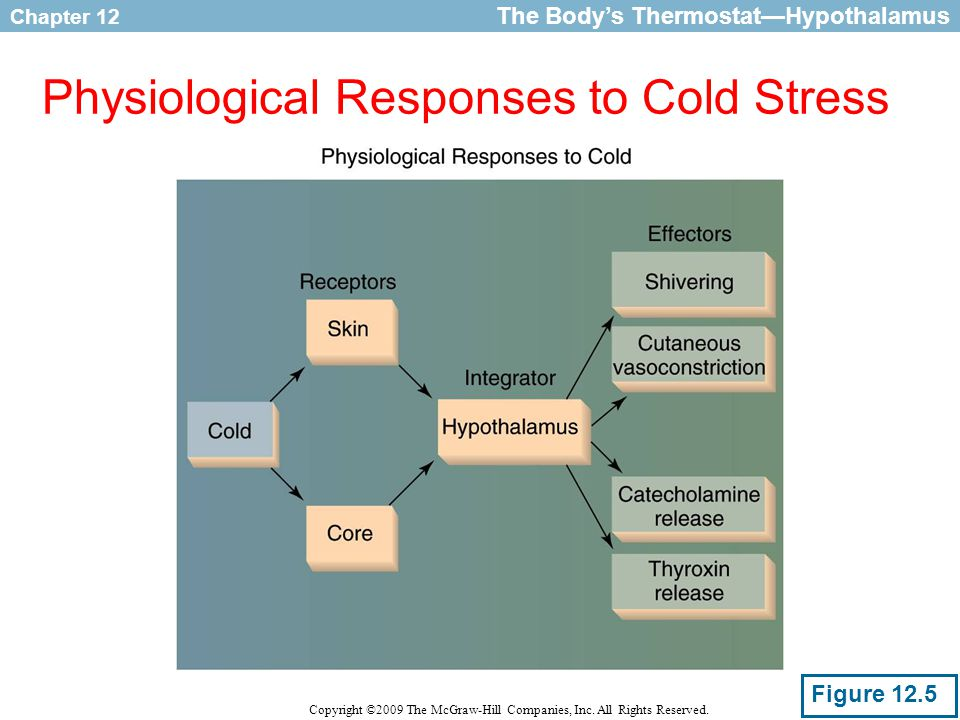 Physiological Responses to Cold Stress