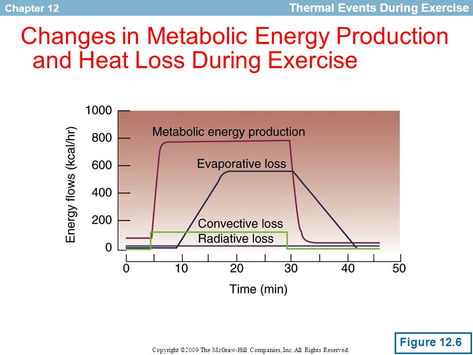 Changes in Metabolic Energy Production and Heat Loss During Exercise