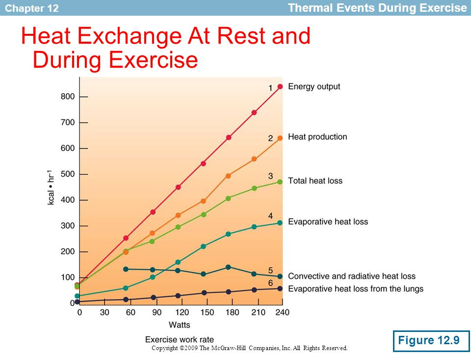 Heat Exchange At Rest and During Exercise