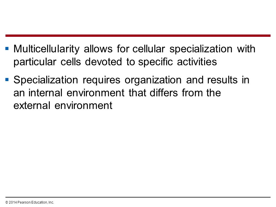 Multicellularity allows for cellular specialization with particular cells devoted to specific activities
