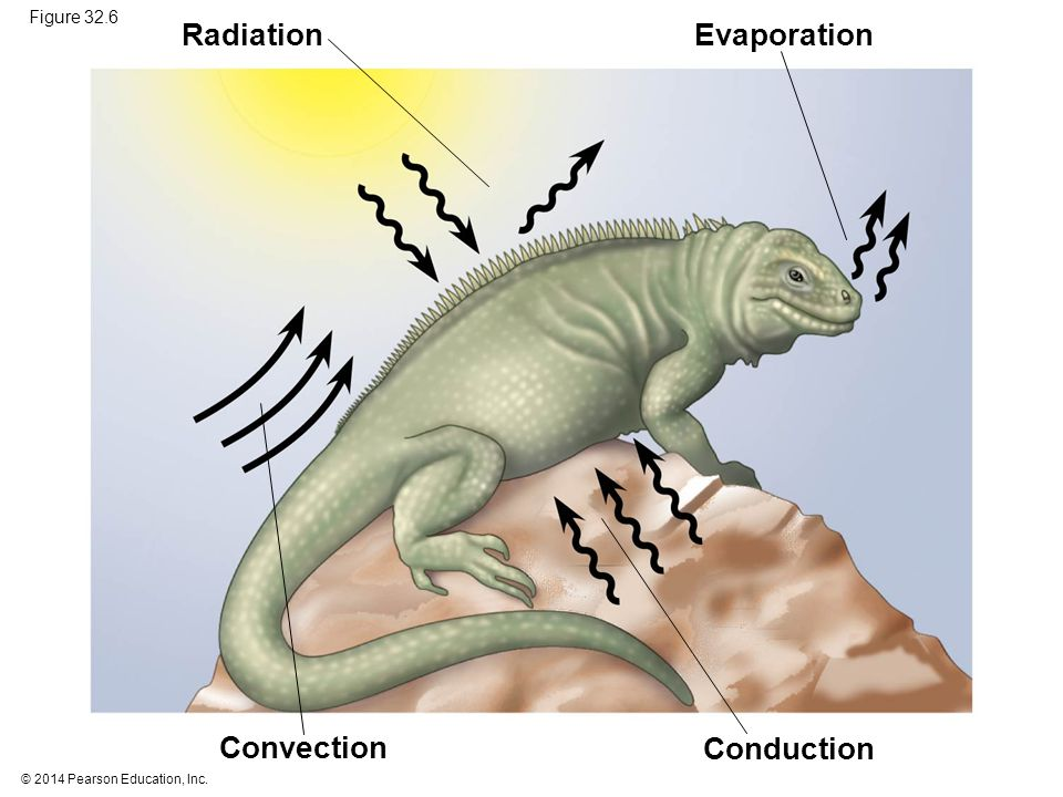Radiation Evaporation Convection Conduction Figure 32.6