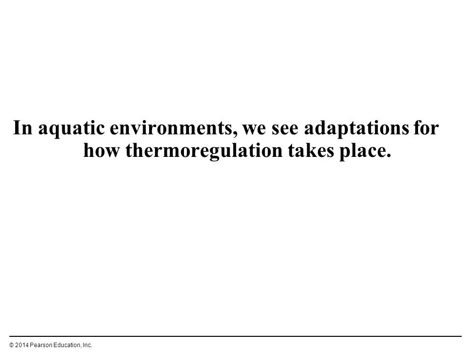 In aquatic environments, we see adaptations for how thermoregulation takes place.