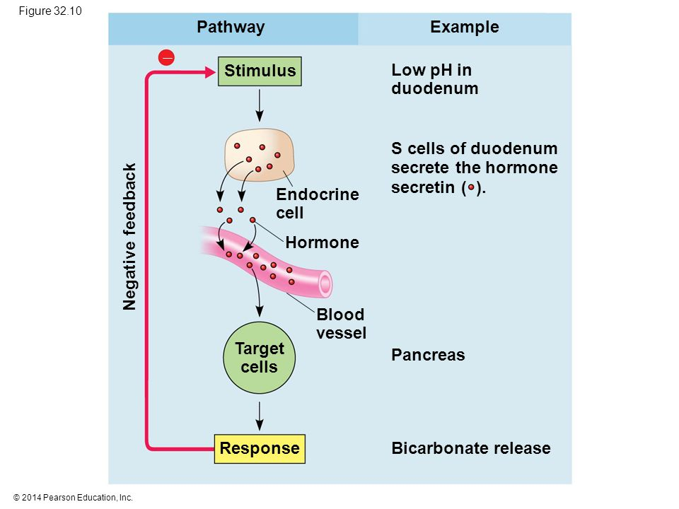 Pathway Example  Stimulus Low pH in duodenum S cells of duodenum