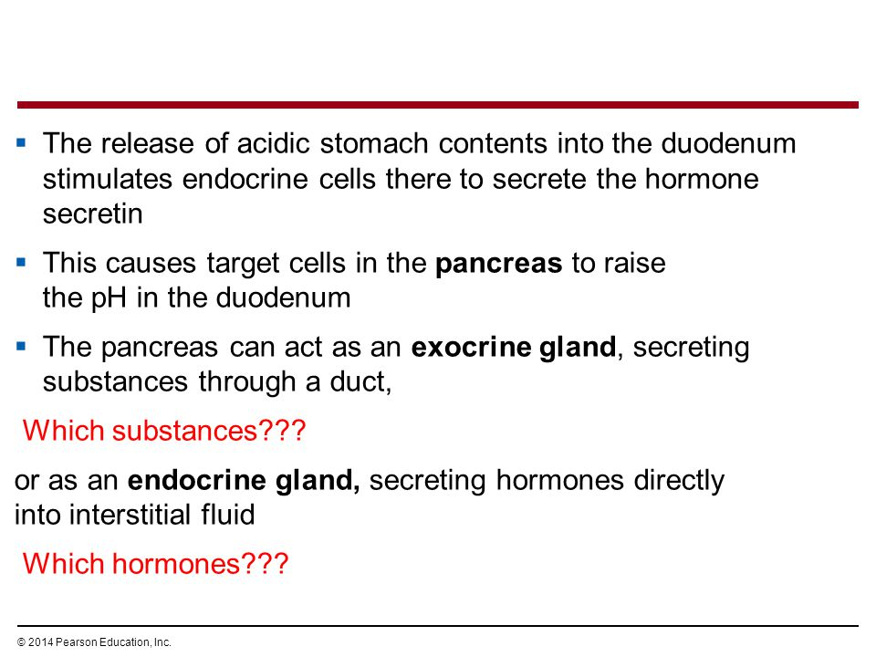 The release of acidic stomach contents into the duodenum stimulates endocrine cells there to secrete the hormone secretin