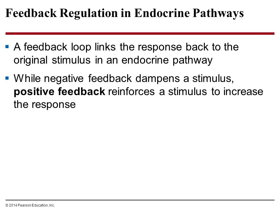 Feedback Regulation in Endocrine Pathways