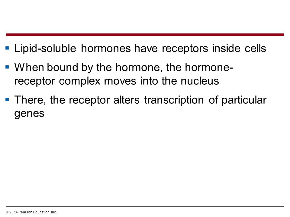 Lipid-soluble hormones have receptors inside cells