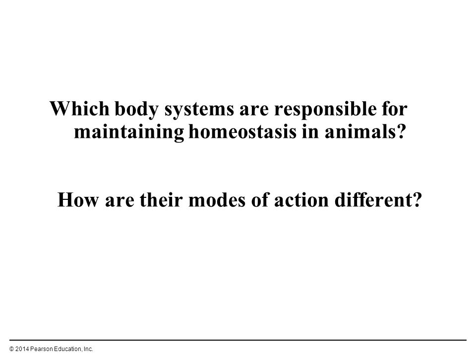 Which body systems are responsible for maintaining homeostasis in animals.