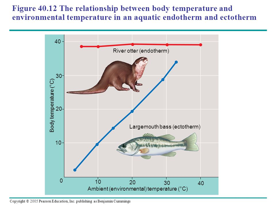 Figure 40.12 The relationship between body temperature and environmental temperature in an aquatic endotherm and ectotherm